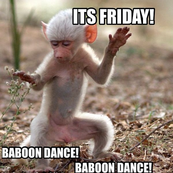 Its friday baboon dance 80 it's friday memes 2018