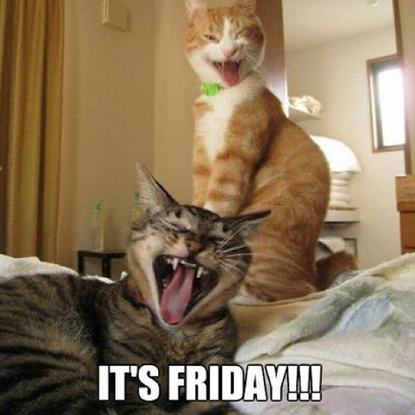 Its friday cats meme 1 80 it's friday memes 2018