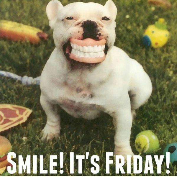 Smile its friday dog meme