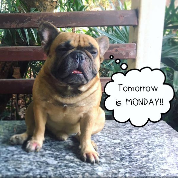 tomorrow is monday dog