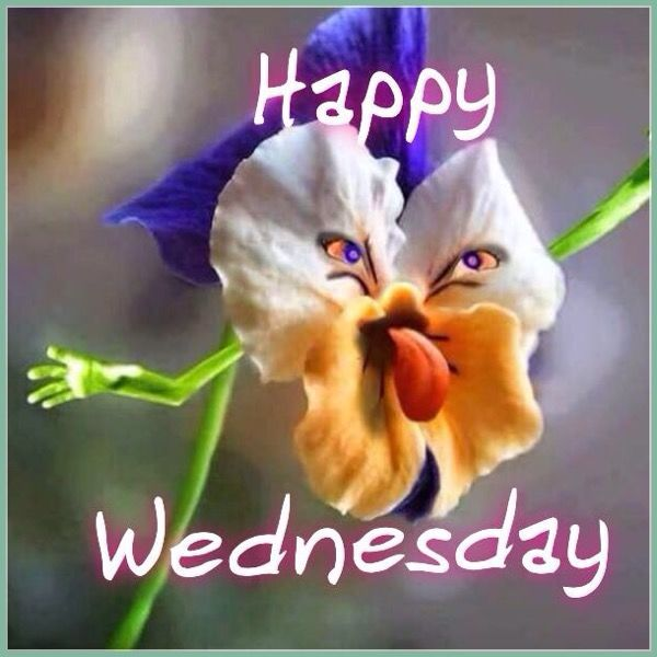 Image result for Wednesday images