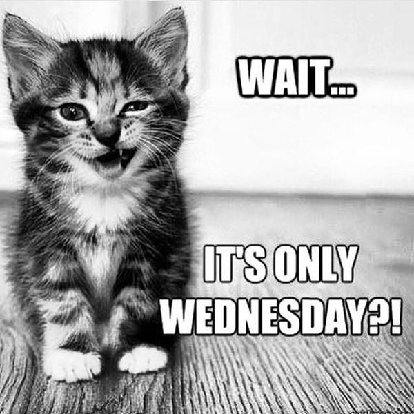 funny wednesday memes with baby cat