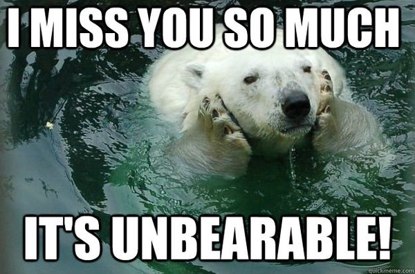 funny i miss you meme9 15 i miss you memes sweetytextmessages