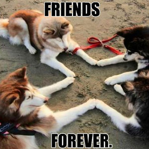 Best Friend Memes To Keep Your Friendship Strong