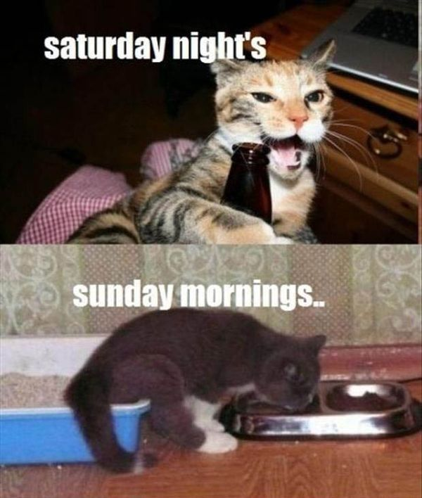 Saturday Funny Pictures 2