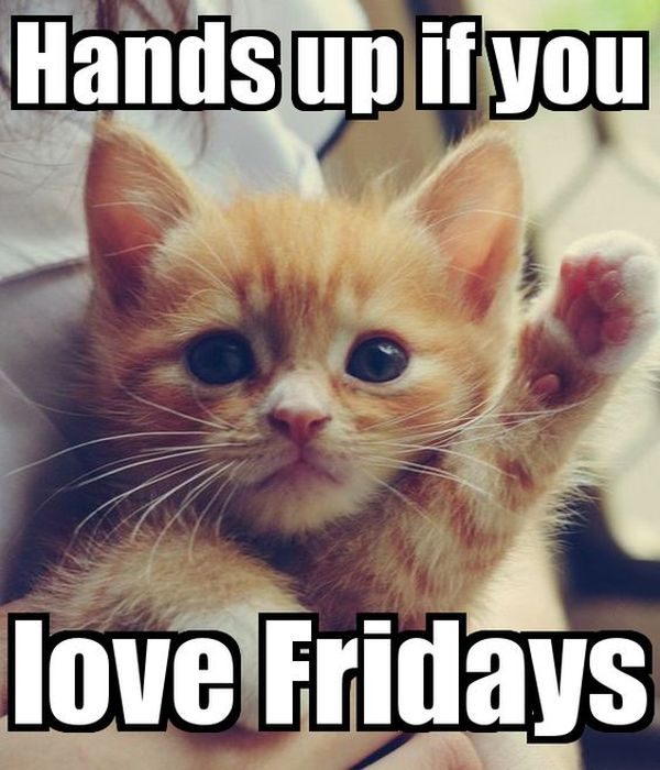 15 Funniest Friday Cat Meme funny cat memes best cute kitten meme and pictures