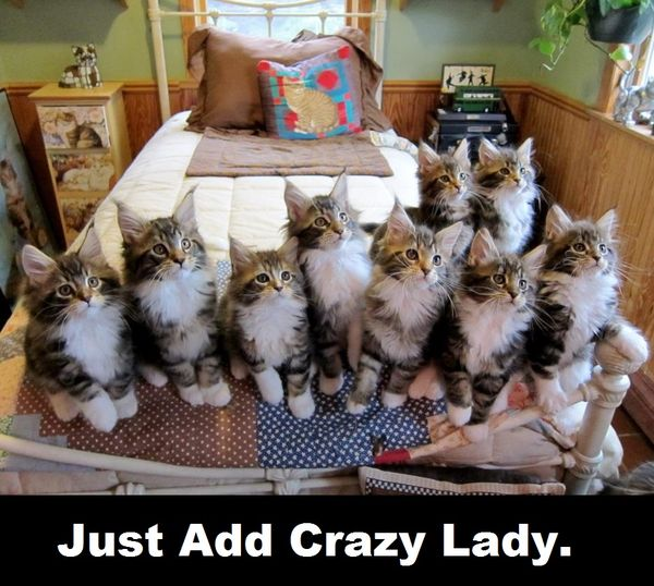 Breathtakin Good Cat Lady Memes