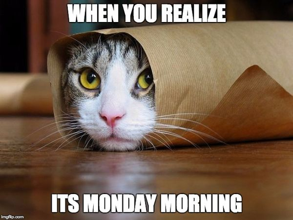 New Monday Cat Meme