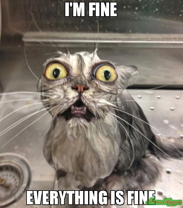 Wet Cat Meme