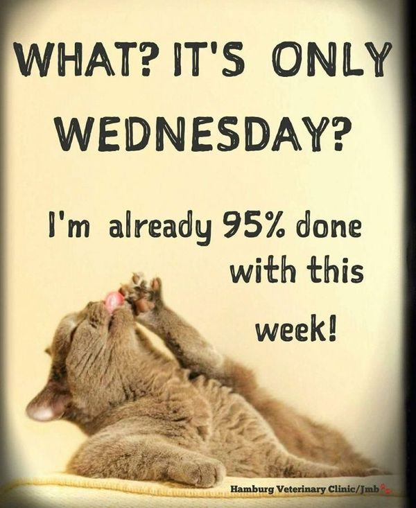 Free Happy Hump Day and Wednesday Cool Images