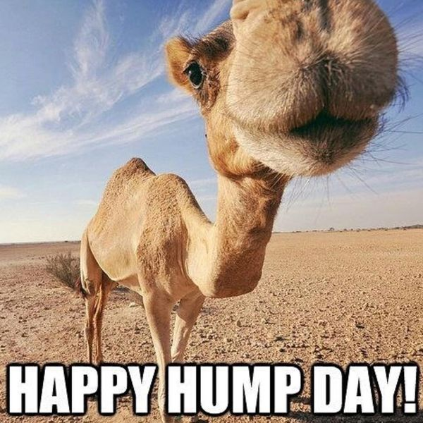 Happy Hump Day Nice Wishes Meme 2