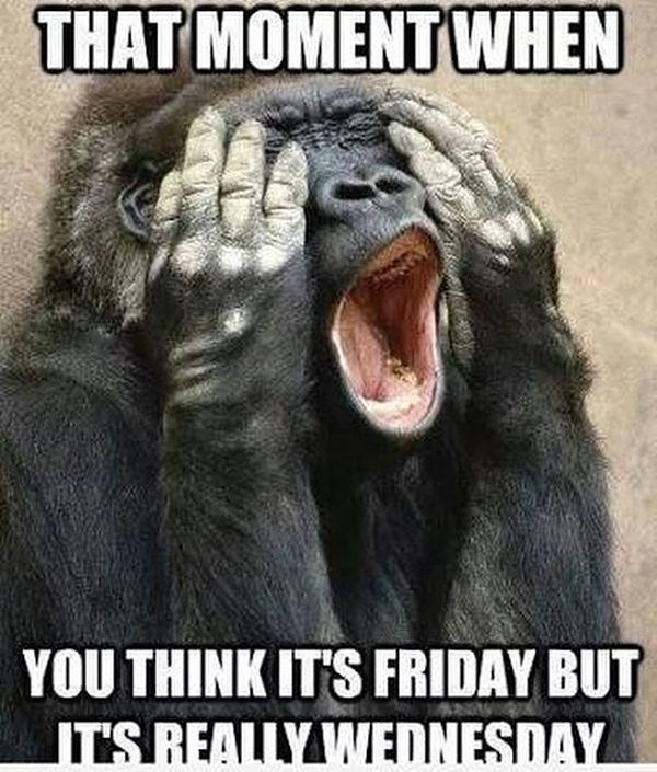 Hilarious Memes about Hump Day