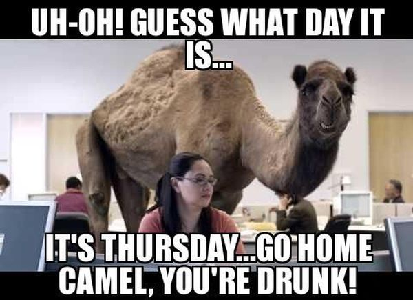 Hilarious Memes about Hump Day 1