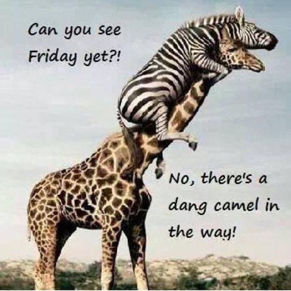 Hilarious Memes about Hump Day 2