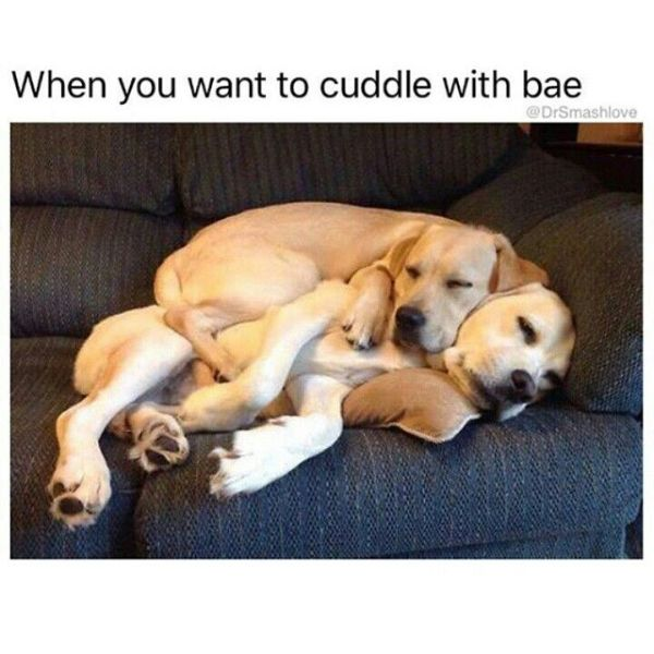 Really Cute and Romantic Memes for Her3