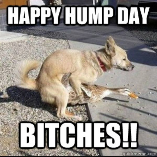 Really Dirty Memes about Hump Day