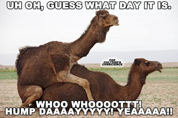 Really Dirty Memes about Hump Day1 happy hump day meme, images and pics