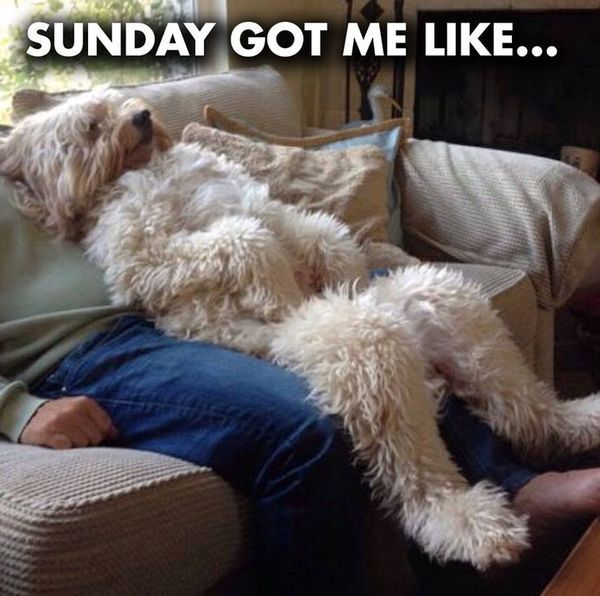 Funny Happy Sunday Memes That Make You Smile
