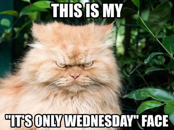 The Best Hump Day Hilarious Meme 3