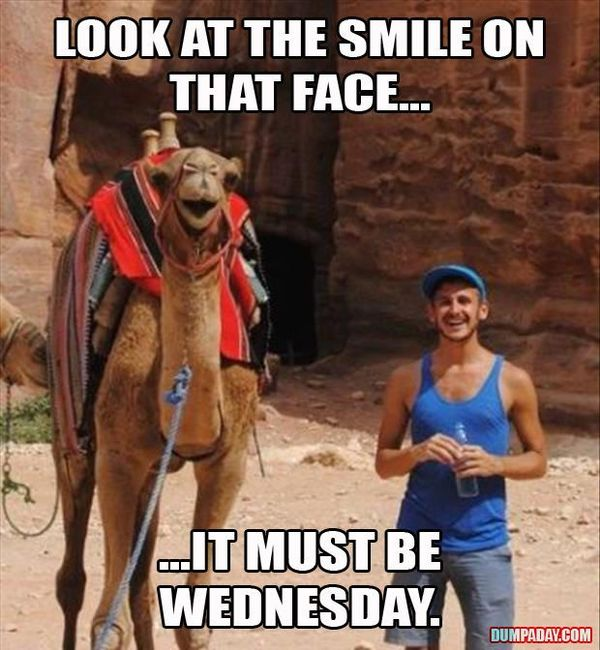 The Best Hump day Funny Pictures 3