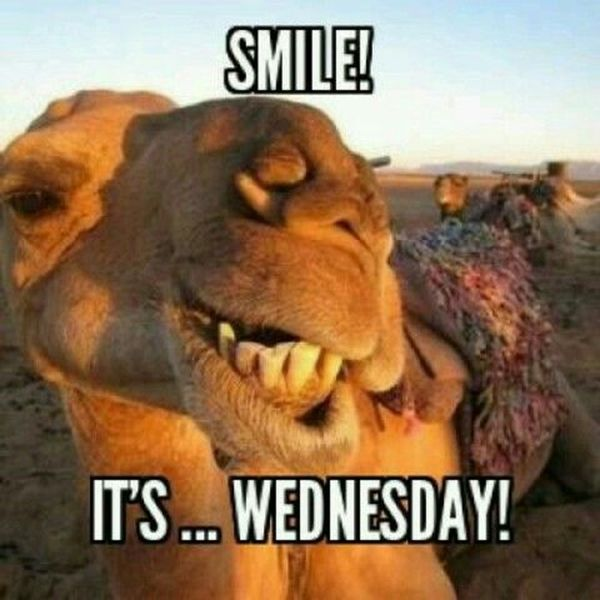 Wednesday VS Hump Day Awesome Meme 1
