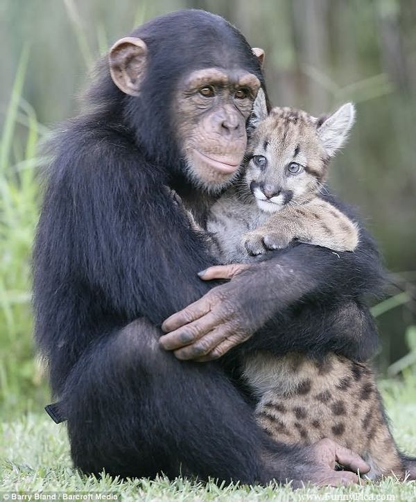 Fresh funny hugging pictures