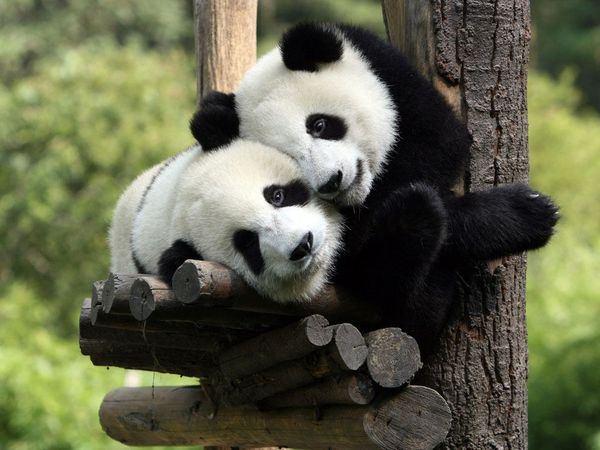 Fine funny hugging pictures