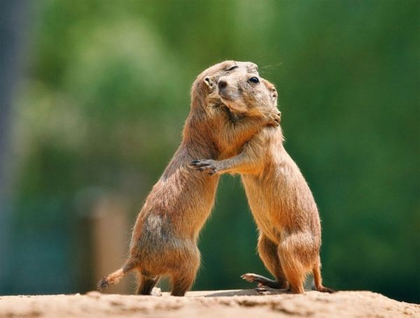 Marvelous funny hugging pictures