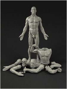Male Adaptable Anatomy Figure