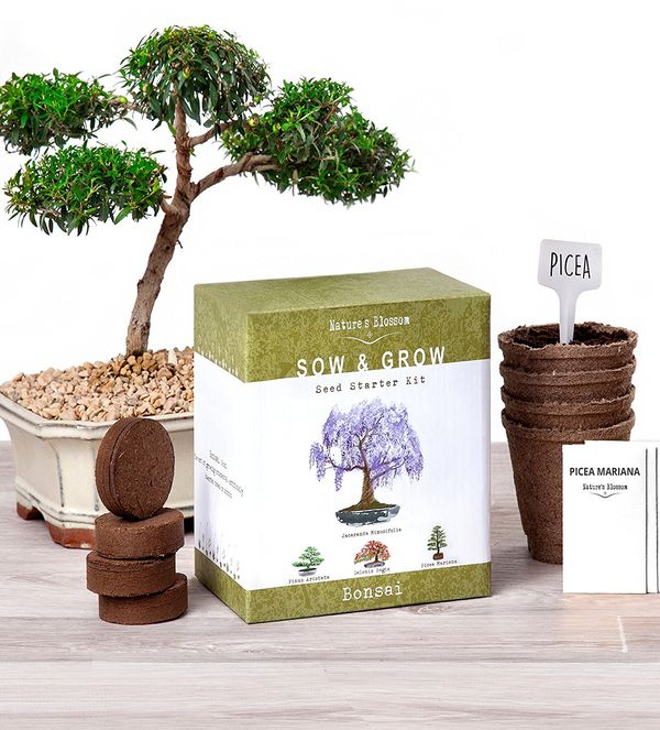 Natures Blossom Bonsai Garden Seed Starter Kit