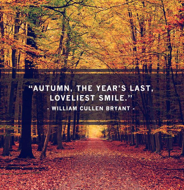 Autumn Phrases: Fall Quotes: 105 Best Sayings About Autumn