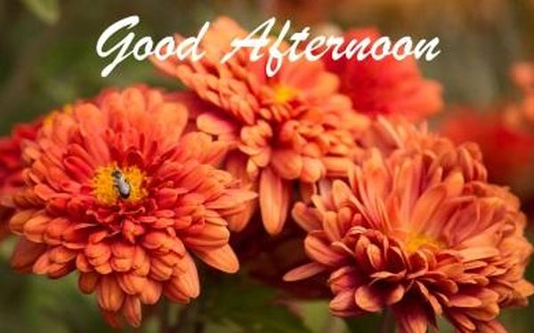 Beautiful Good Afternoon Images to Use as Free Wallpaper 1