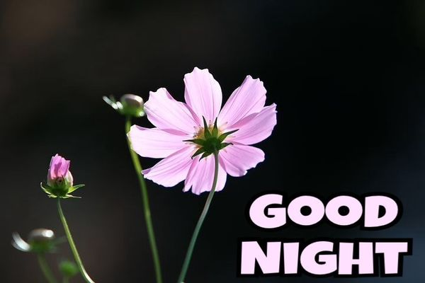 Useful Good Night Images with Nice Flowers 3